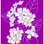 February Flower Primrose